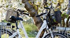 Location Vélo Electrique à Bonnieux