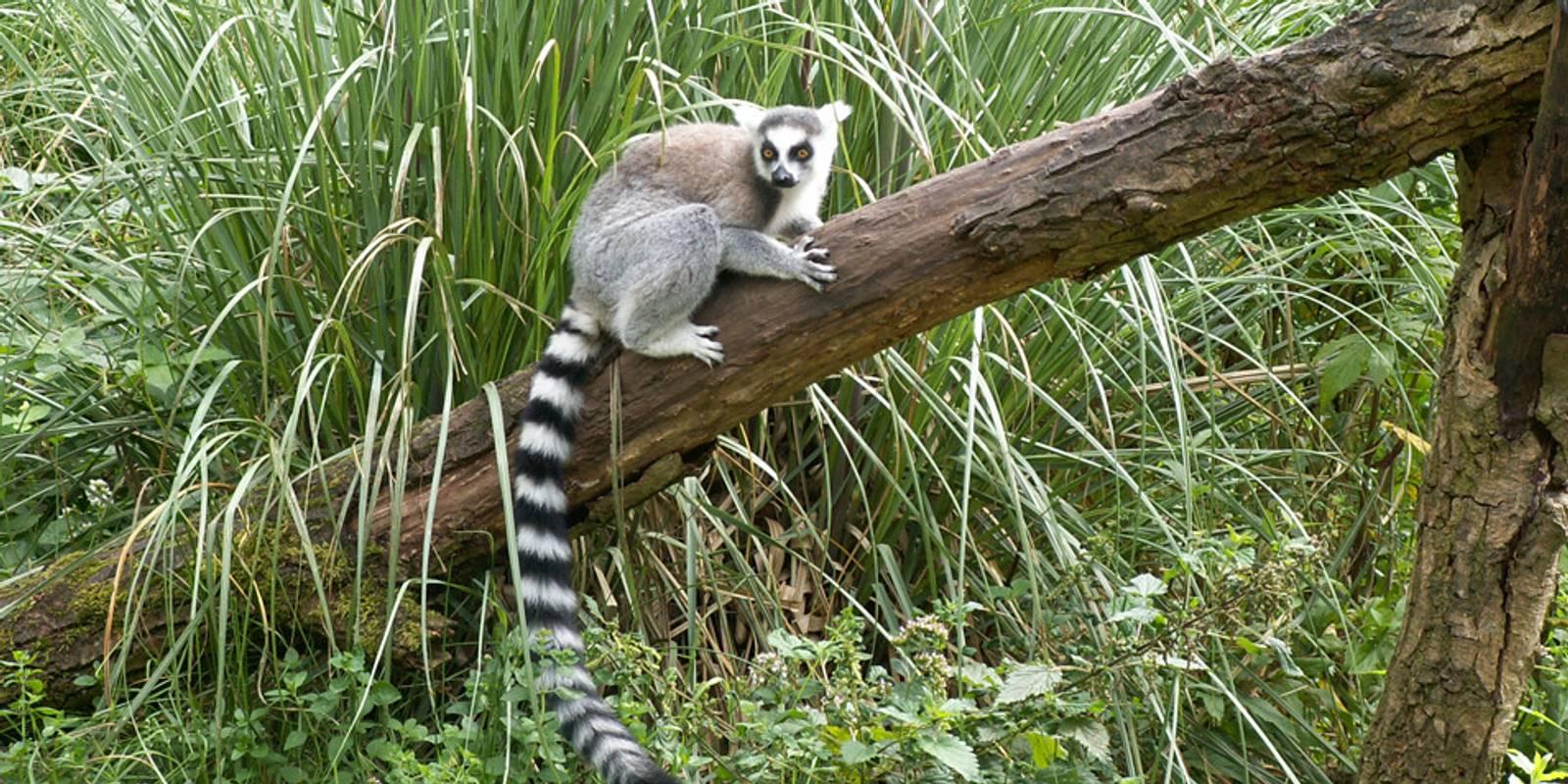 Grande traversée de Madagascar