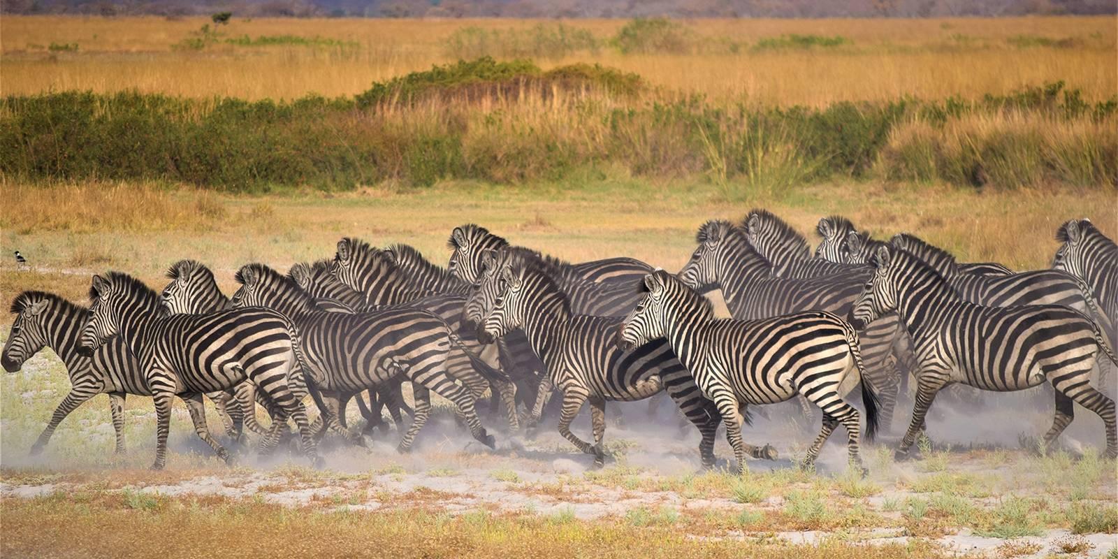 Voyage de reconnaissance : Aux frontières du Zambèze