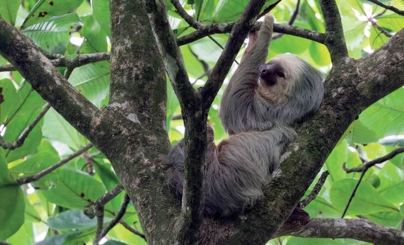 rencontres gratuites au Costa Rica