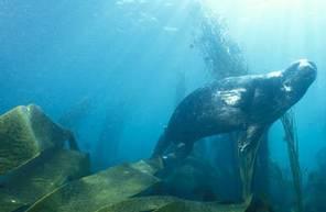 Baptême de Plongée sous marine à Brest