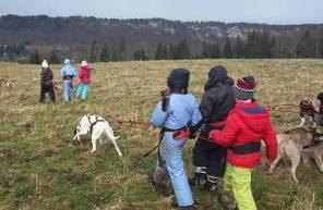Balade en Cani rando dans le Jura près de Lons-le-Saunier