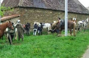Randonnée à cheval près de Limoges