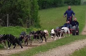 Balade en Cani kart dans le Jura près de Lons-le-Saunier