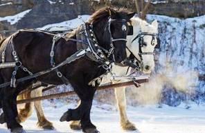 Balade à cheval sur neige près de Chambéry