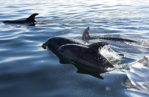 Découverte en bateau des oiseaux et dauphins (6-8 pers) depuis Quiberon
