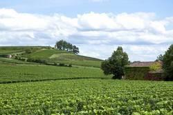 BTS ACSE - Analyse, conduite et stratégie de l'entreprise agricole
