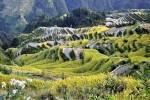 Chine - Guizhou - rizieres et fleurs de Jaibang