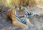 Madhya Pradesh - parc national de Bandhavgarh
