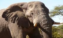 Botswana - Parc national de Chobe