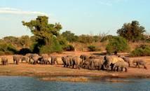 Botswana - Parc Chobe